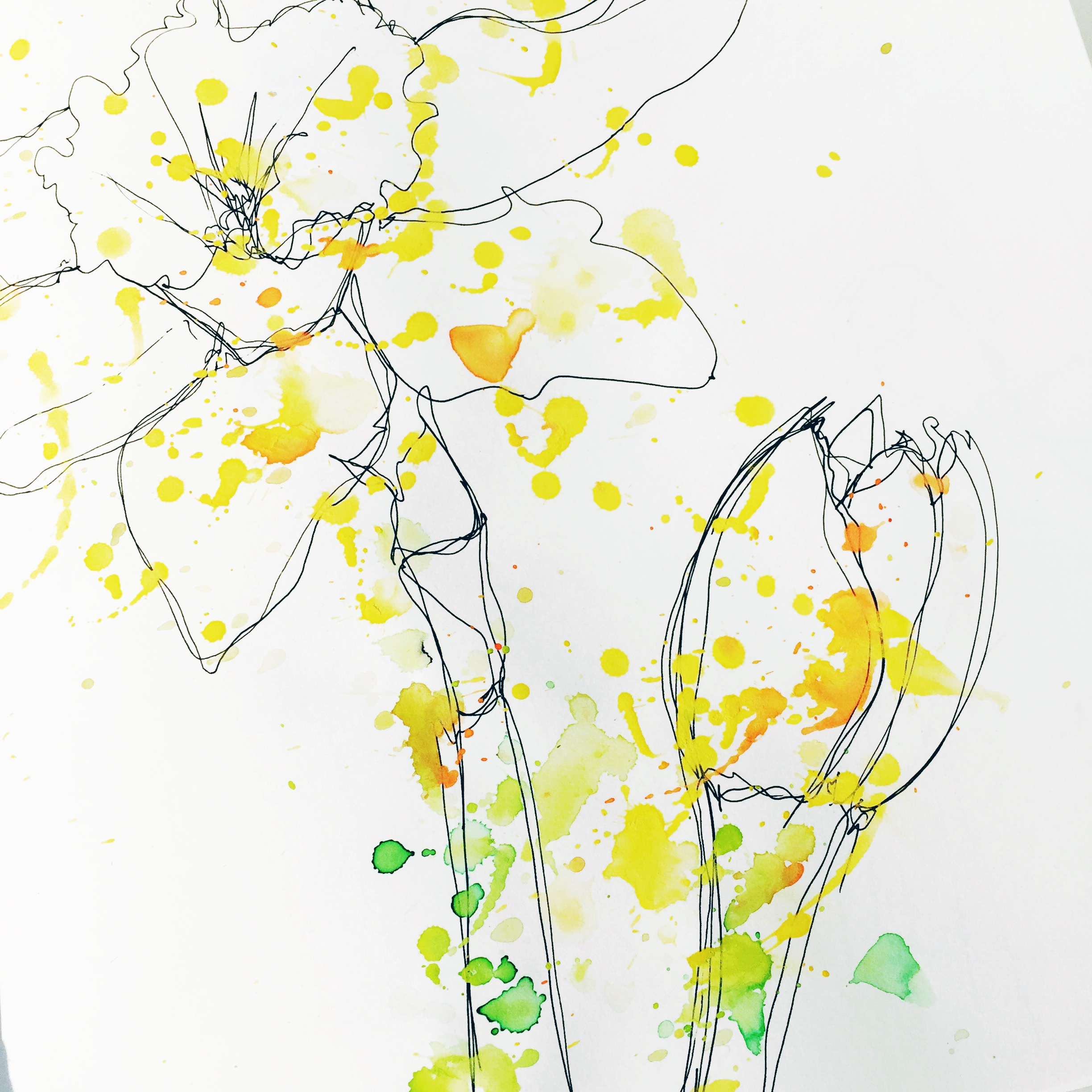 daffodil drawing7