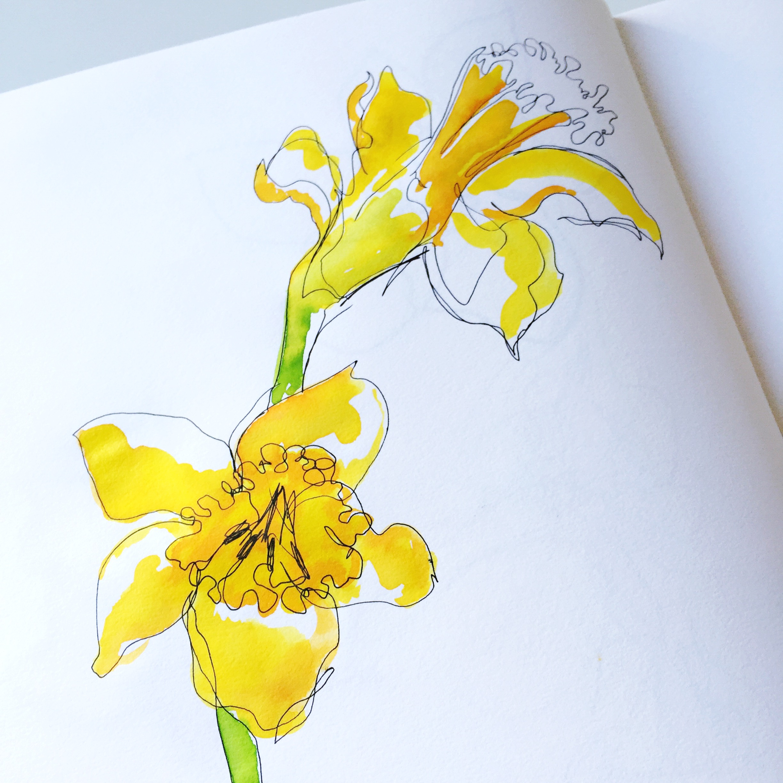 Daffodil sketch2