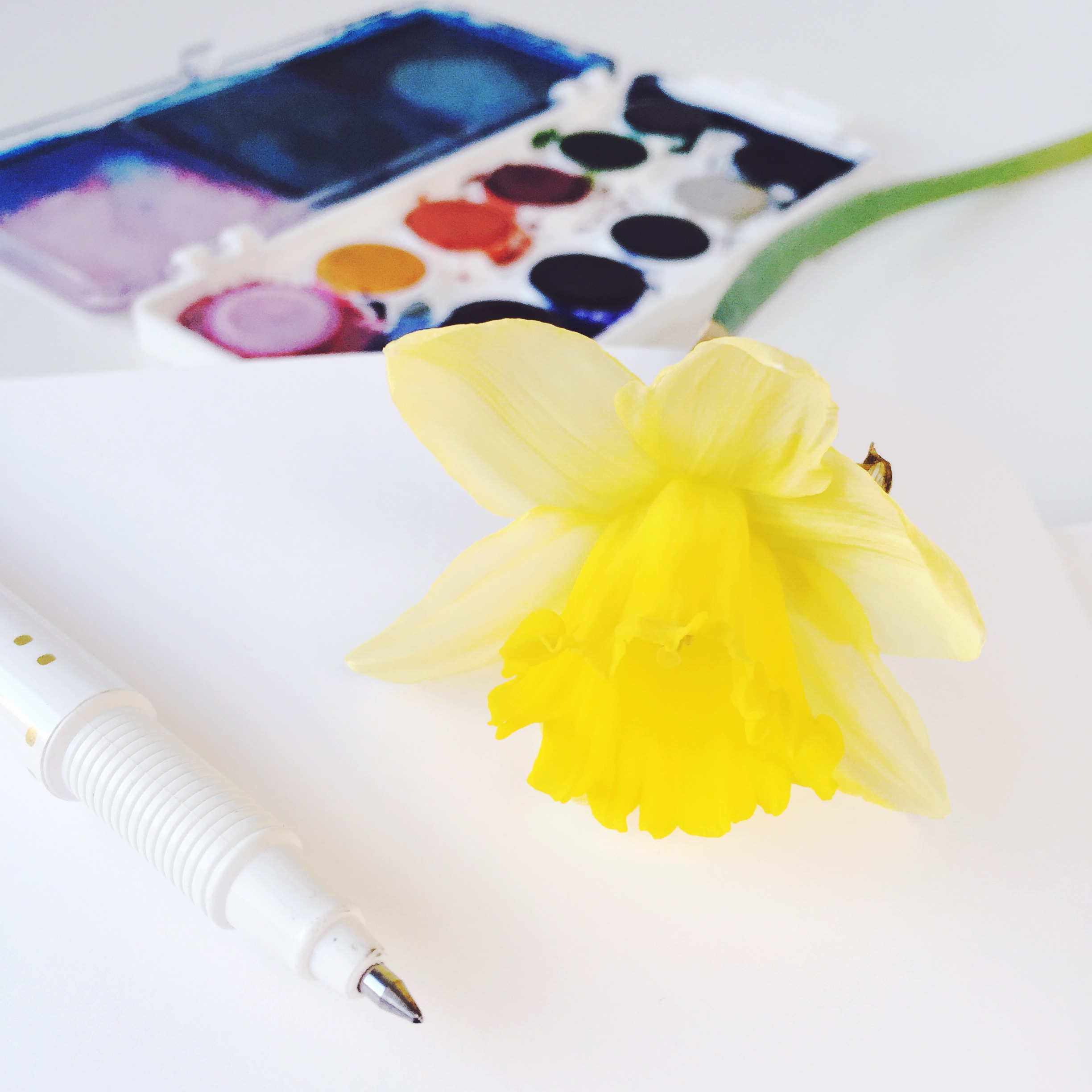 Daffodil sketchbook1