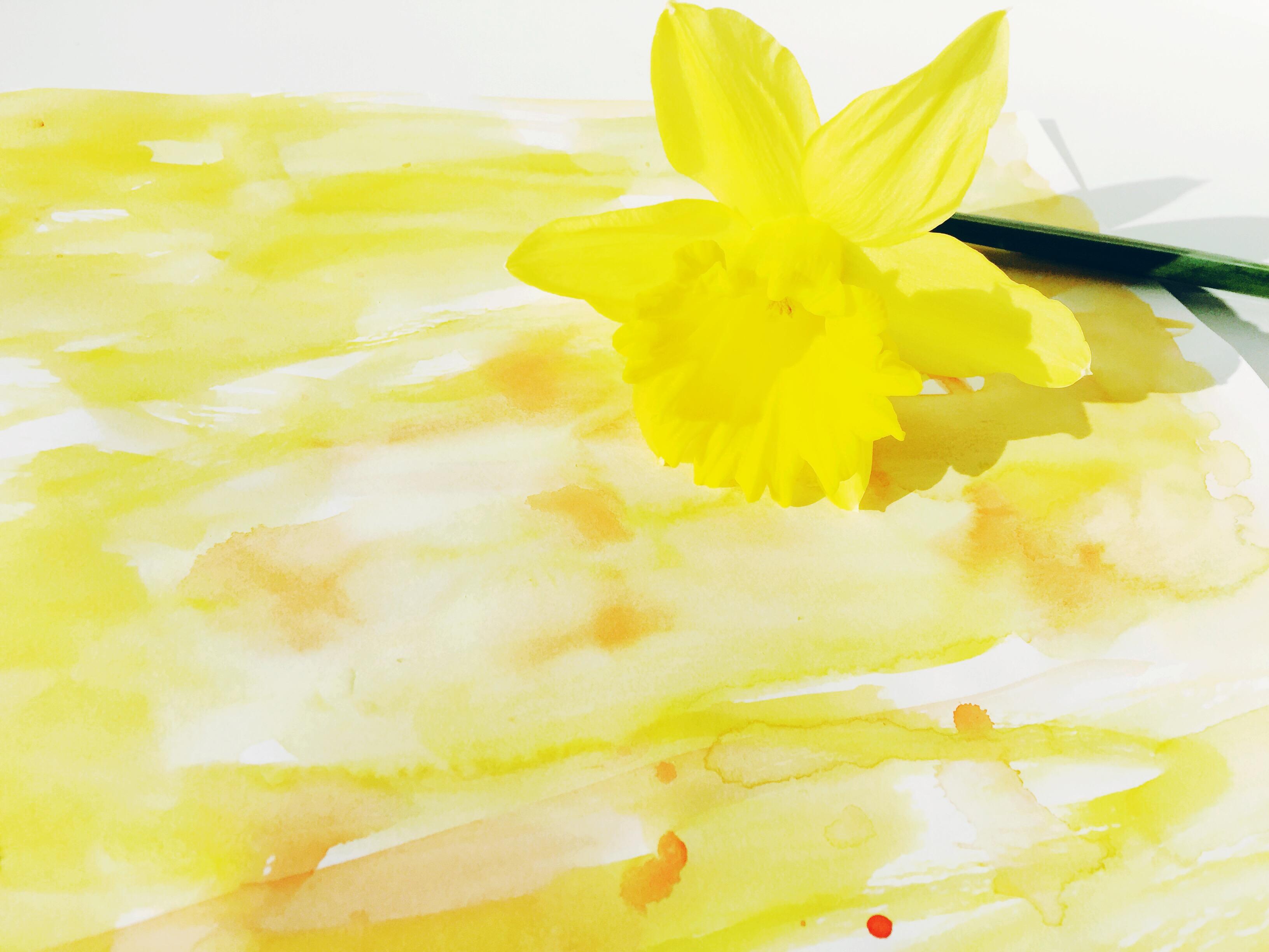 daffodil sketchbook