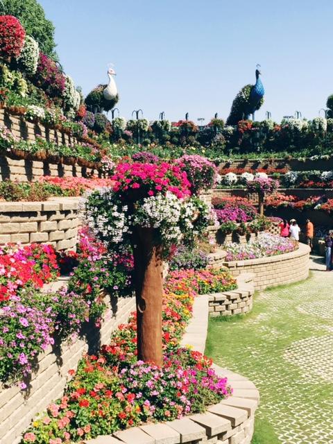 Miracle Garden Dubai 15