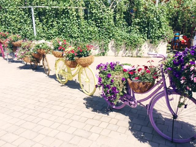Miracle Garden Dubai 2