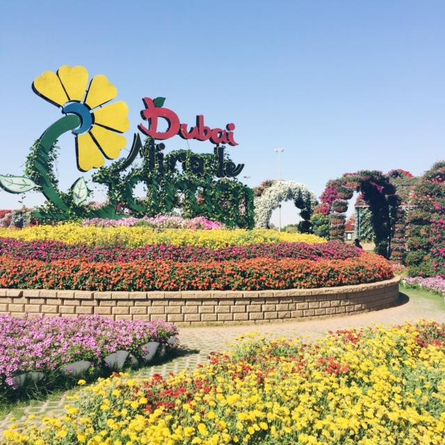 Miracle Garden Dubai 5