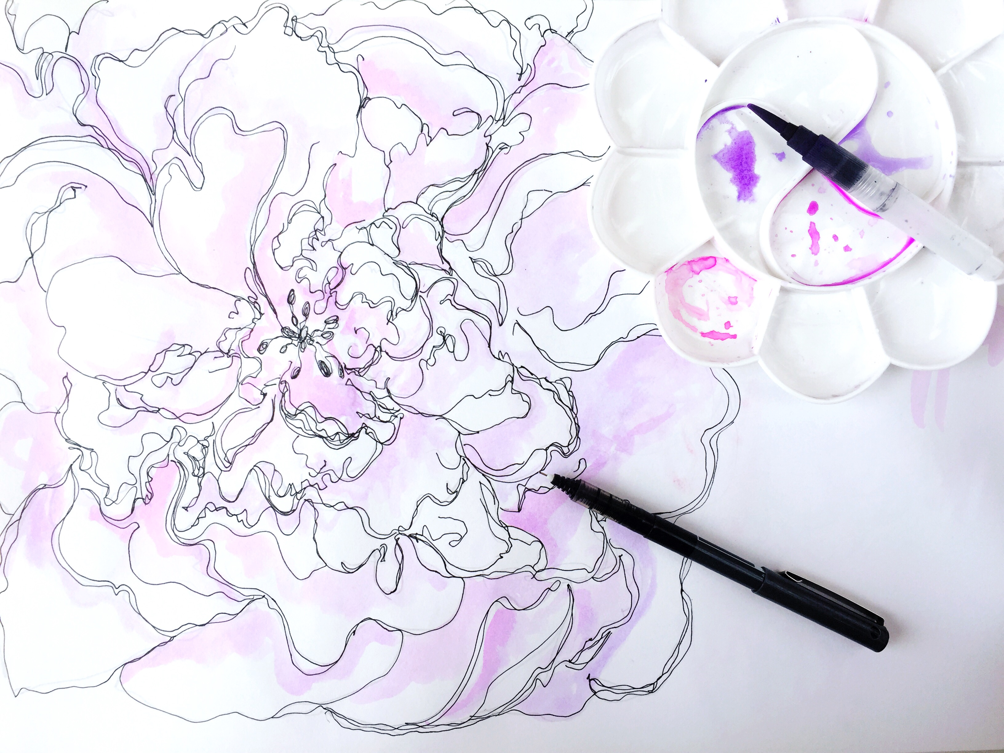 peony line drawing with paint palette