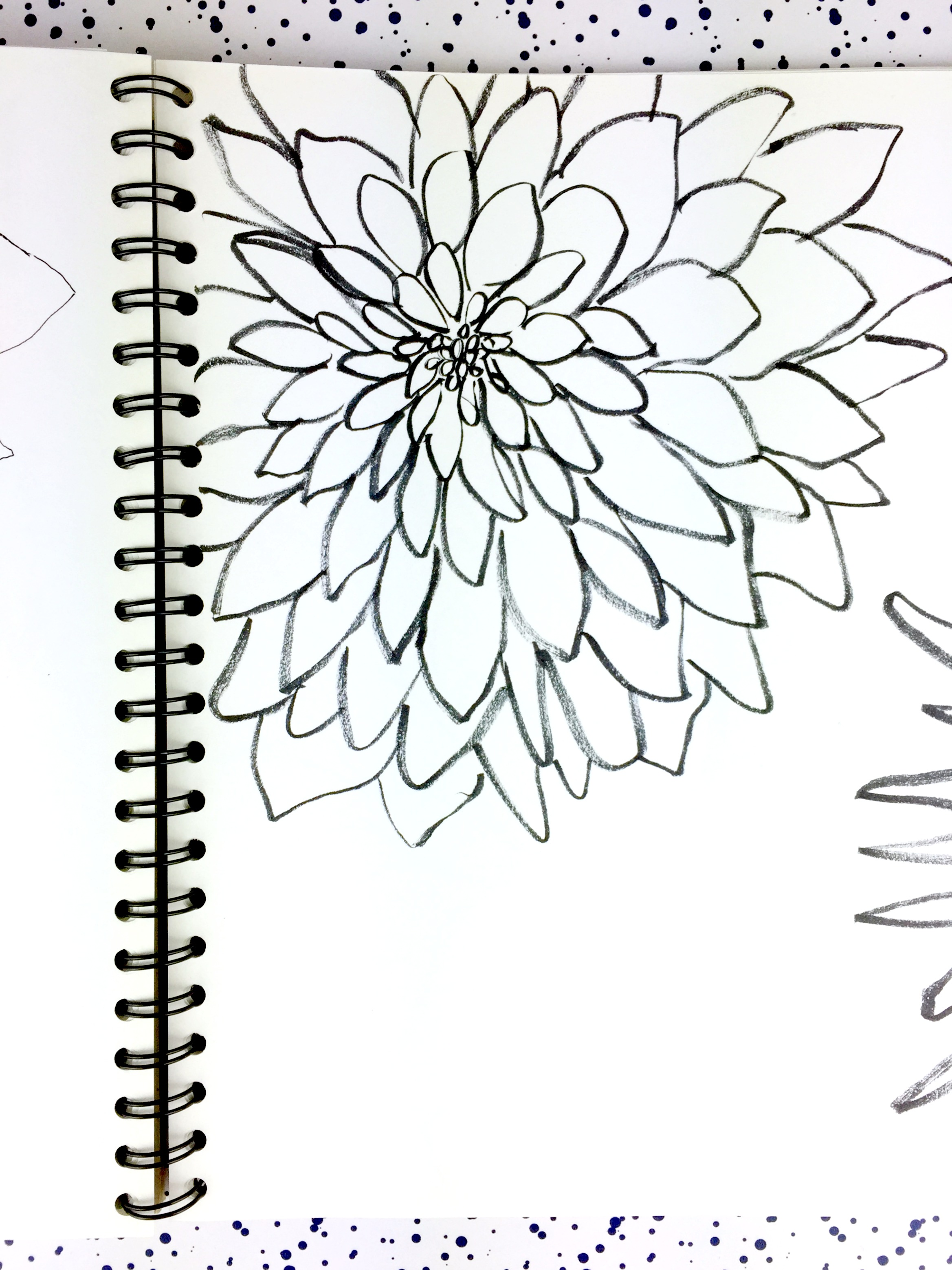 dahlia-ink-drawing-daphnerosa-2