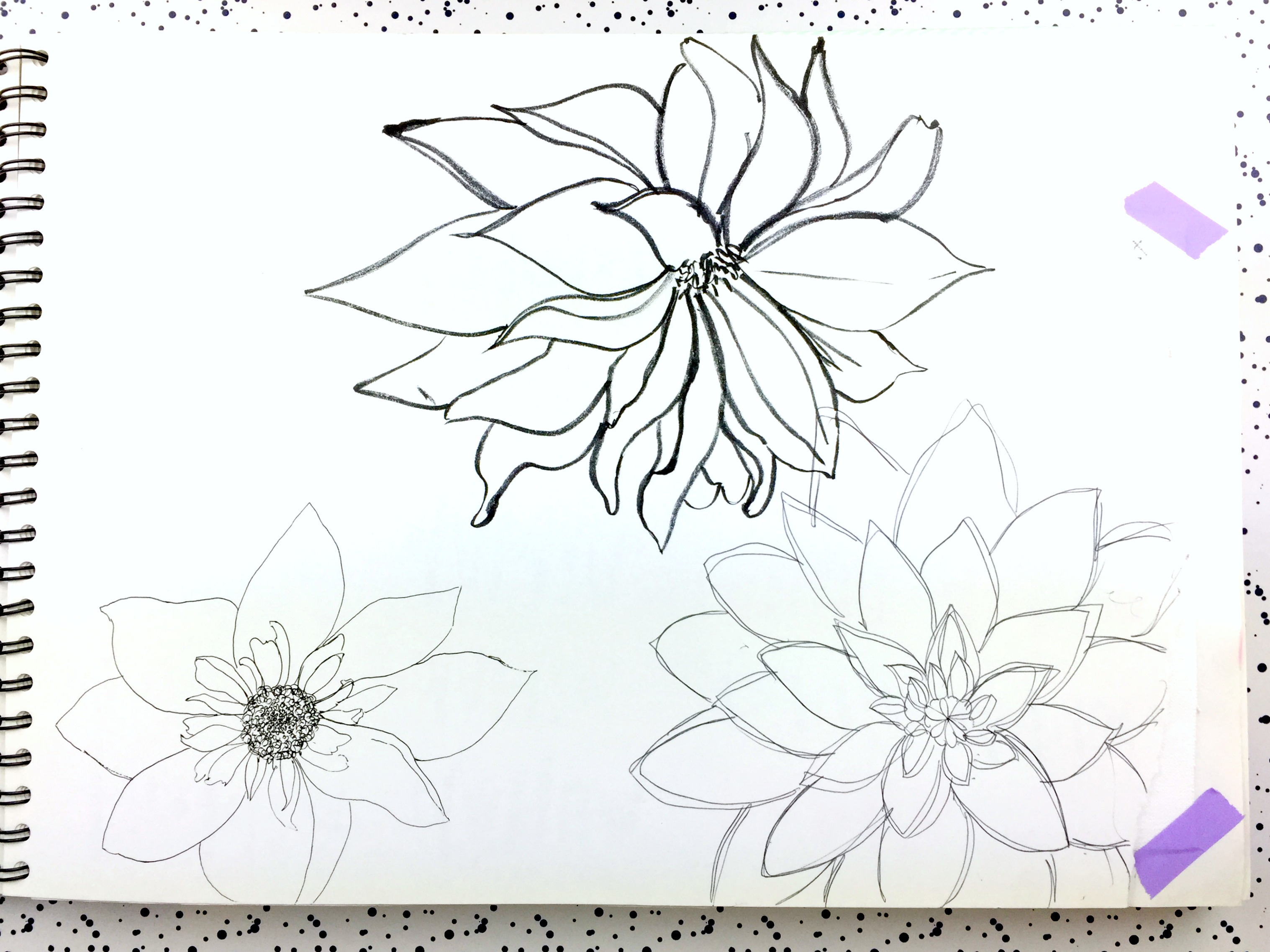 dahlia-ink-drawing-daphnerosa-3