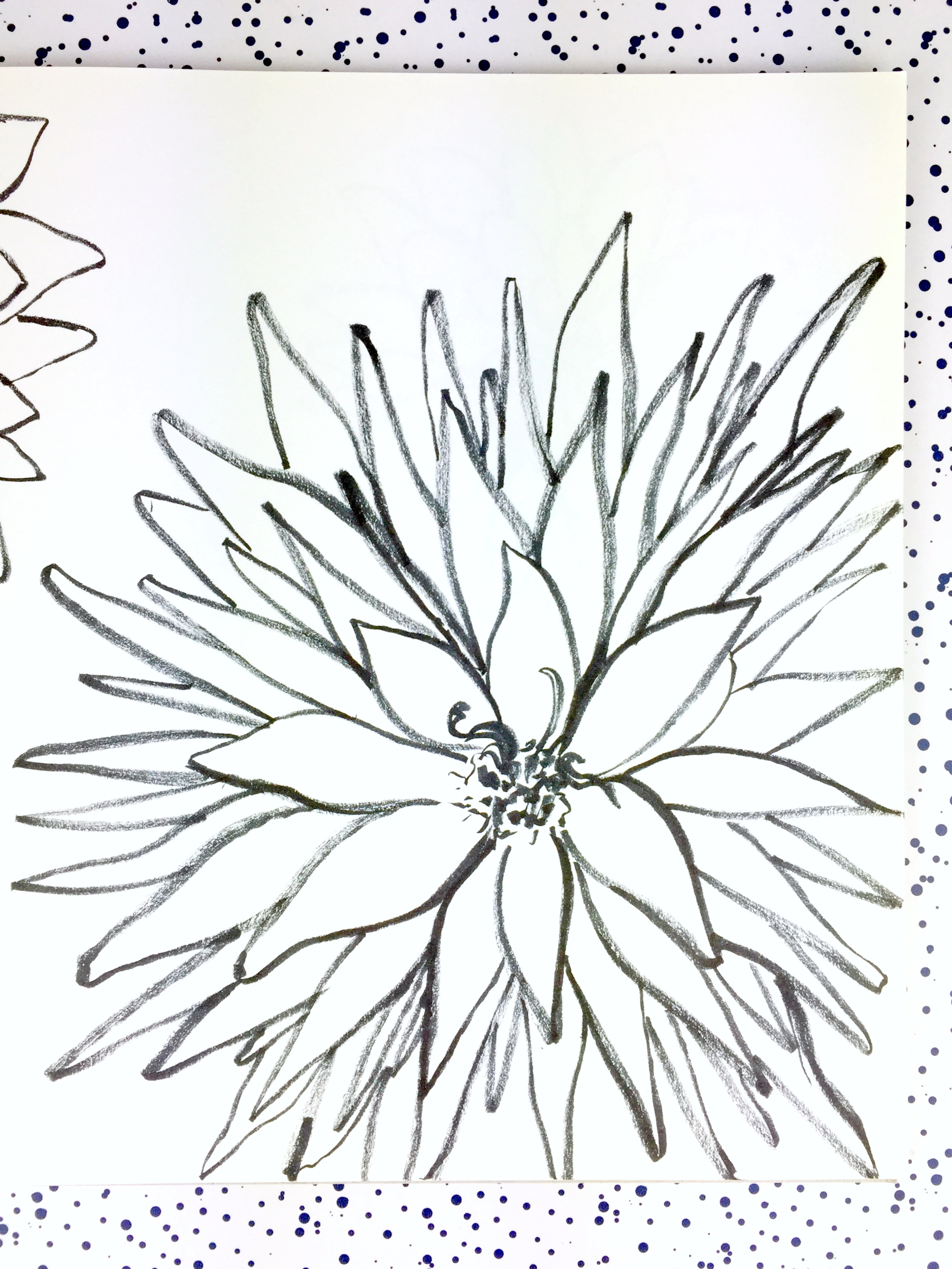 dahlia-ink-drawing-daphnerosa