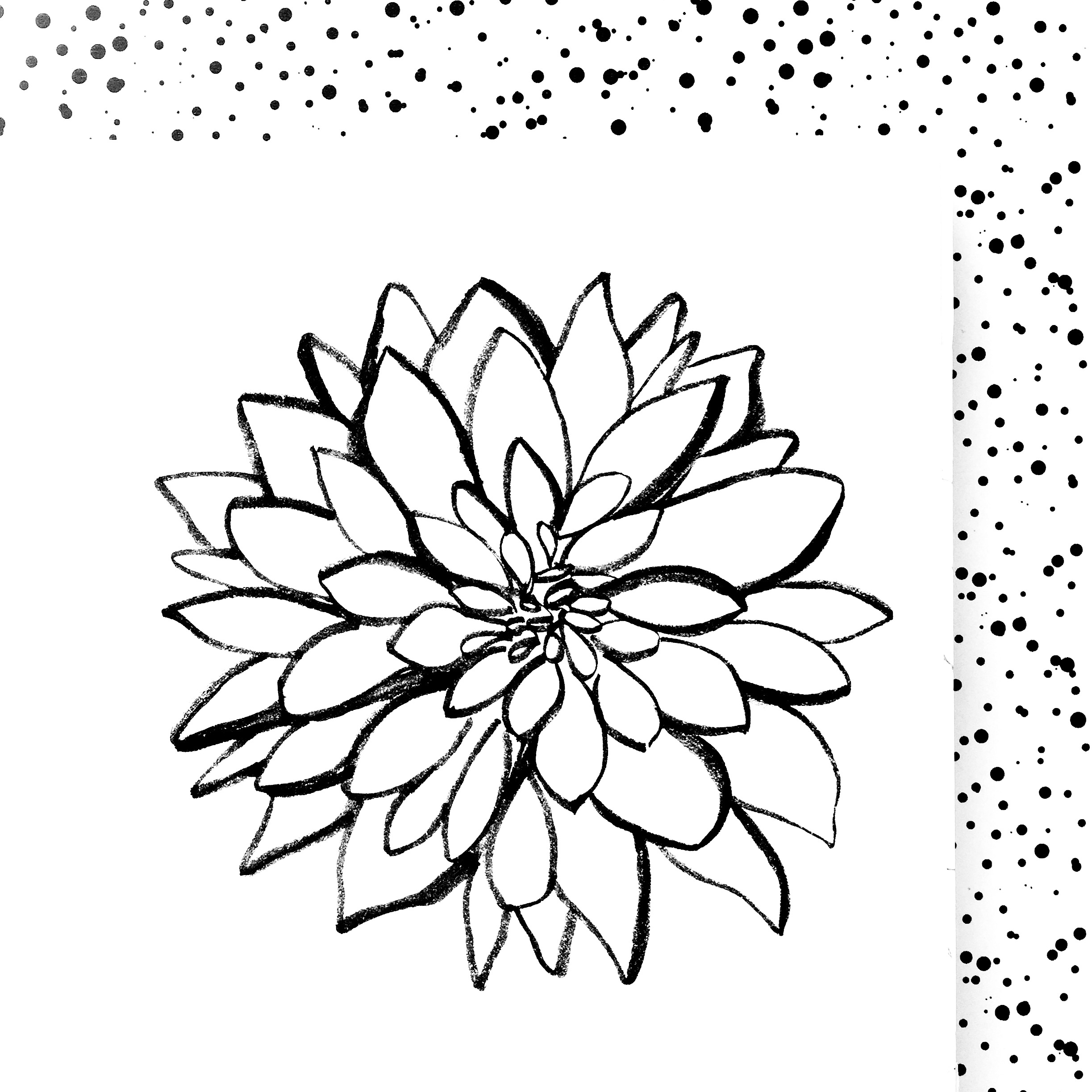dahlia-ink-drawing-sqaure-daphnerosa